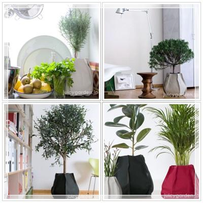 nuno_plant-ver.jpg